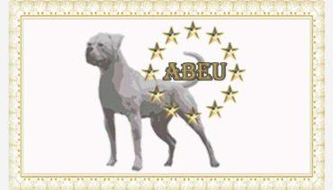 american-bulldog-rasstandaards-organisatie