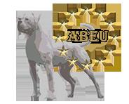 American Bulldog EU